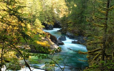 Strangers Save Drowning Boy in Santiam River