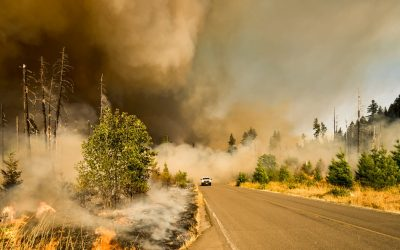 Several Trails Open After Columbia Gorge Wildfire