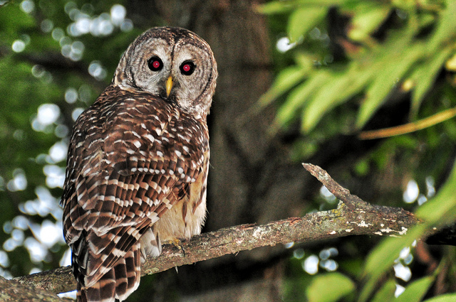 New signs warn park users of potential owl attacks