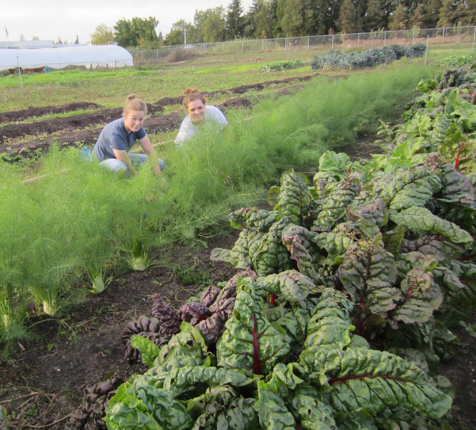Youth farm helps food share, grows leaders