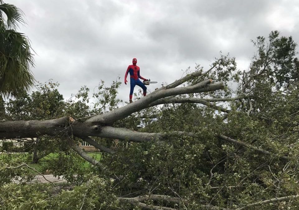 Real-life Spider-Man helps pick up after Hurricane Irma