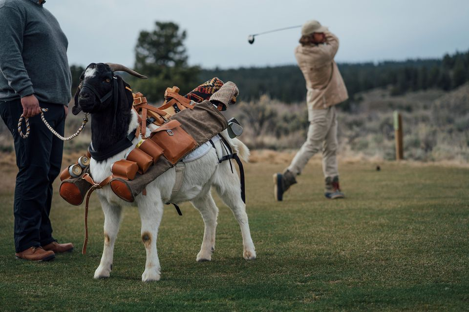 Newest attraction in Oregon: Golf with a Goat Caddie